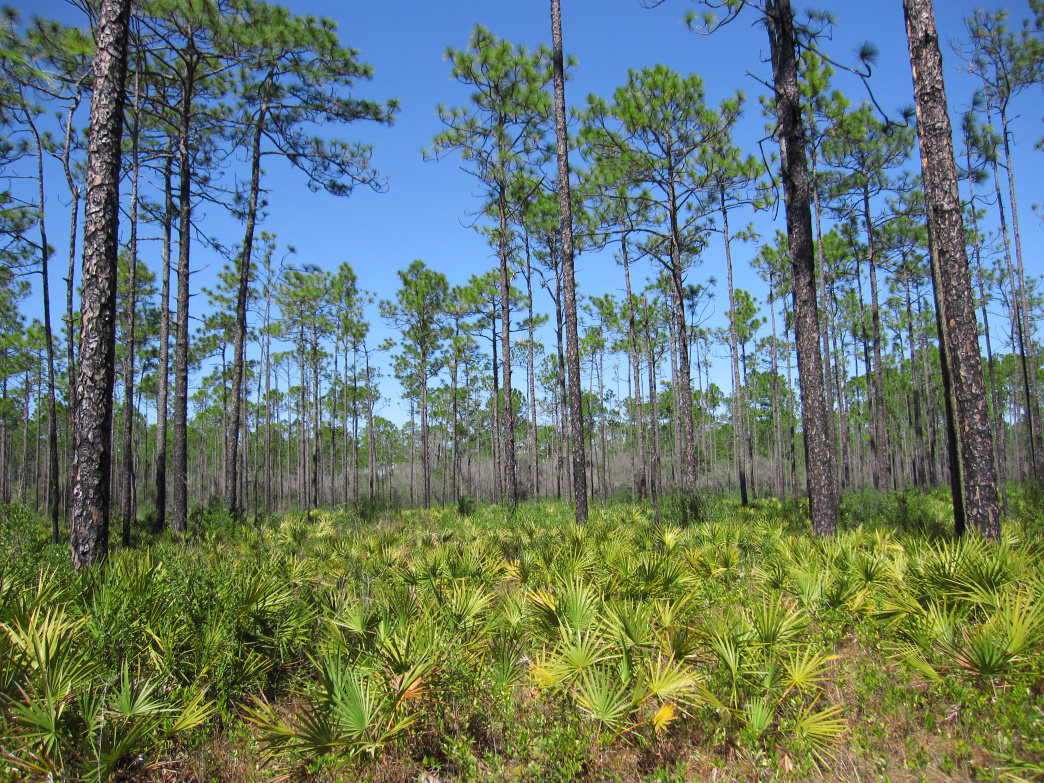 Explore a different side of Florida in the Apalachicola National Forest.
