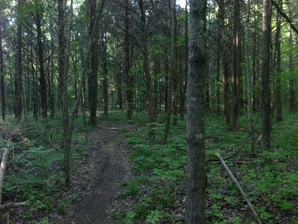 The Stanky Creek singletrack is narrow, densely wooded, and super challenging—and some of the best around.