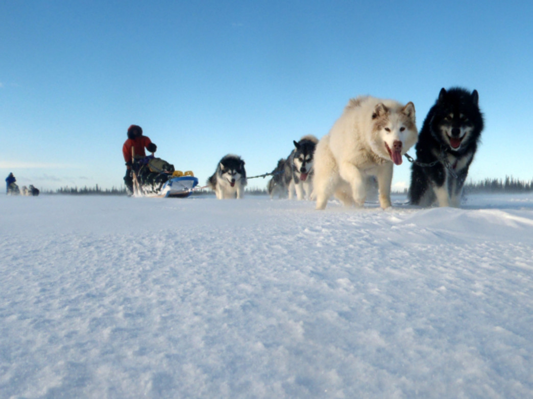 The Freemans will be traveling by dogsled during the winter months.