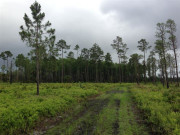 Image for Tosohatchee Wildlife Management Area - Trail Running