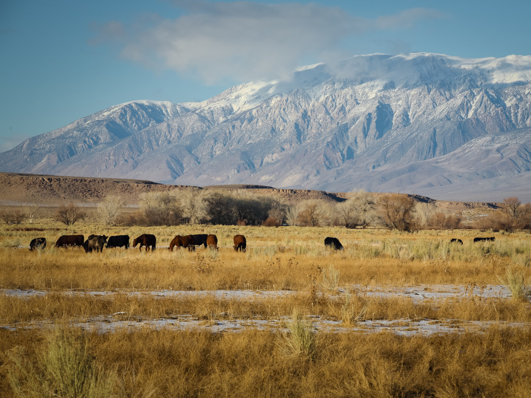The Eastern Sierra rise out of the Owens Valley.