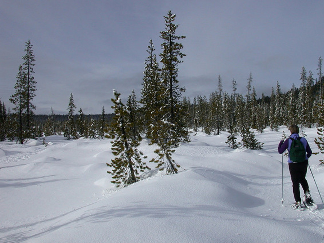 Snowshoeing can be a challenging, yet rewarding, workout.