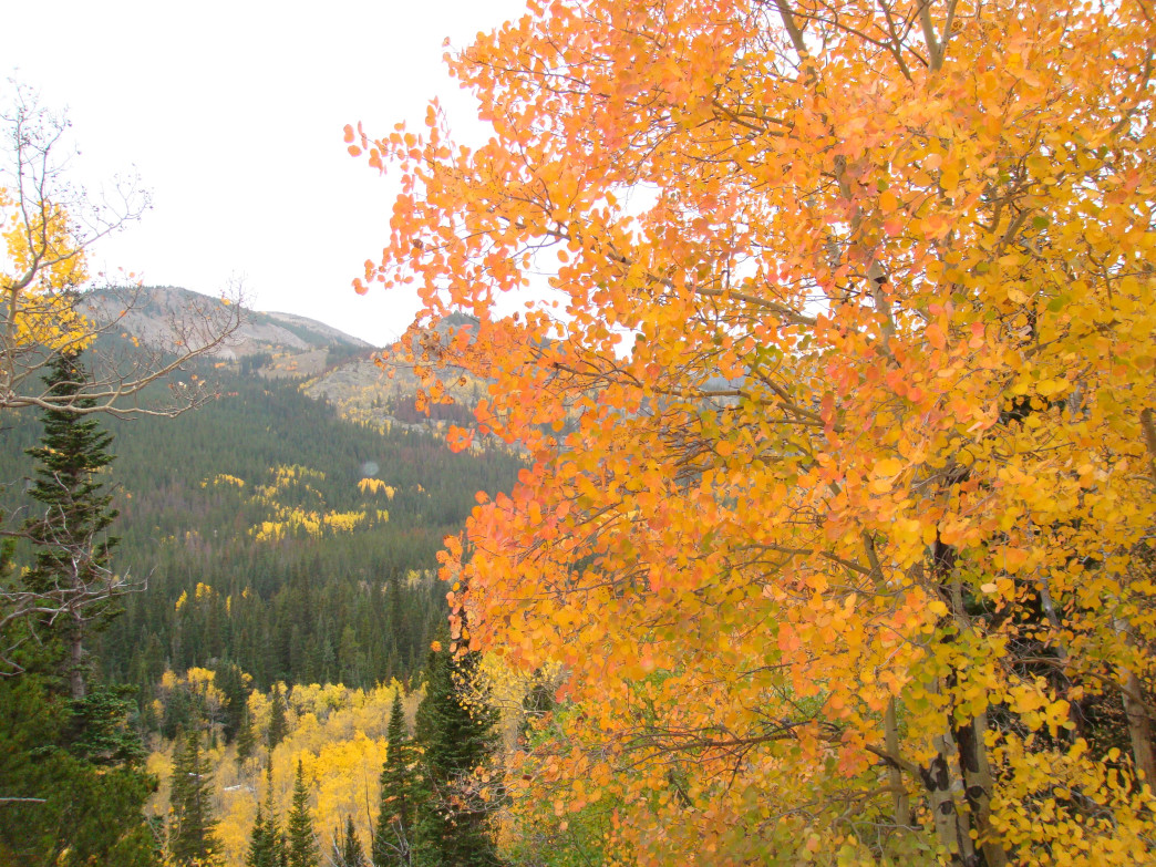 Fall foliage in Colorado typically peaks between the third week of September and mid-October.