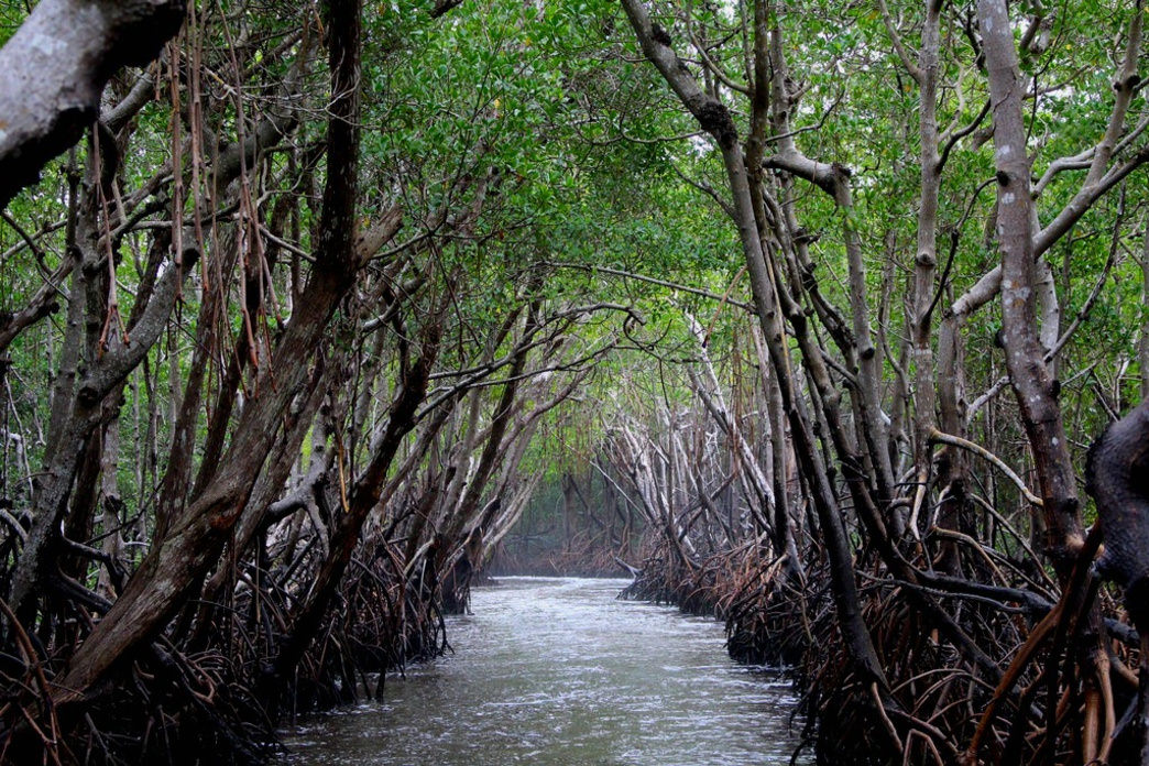 A mangrove canal in Everglades National Park