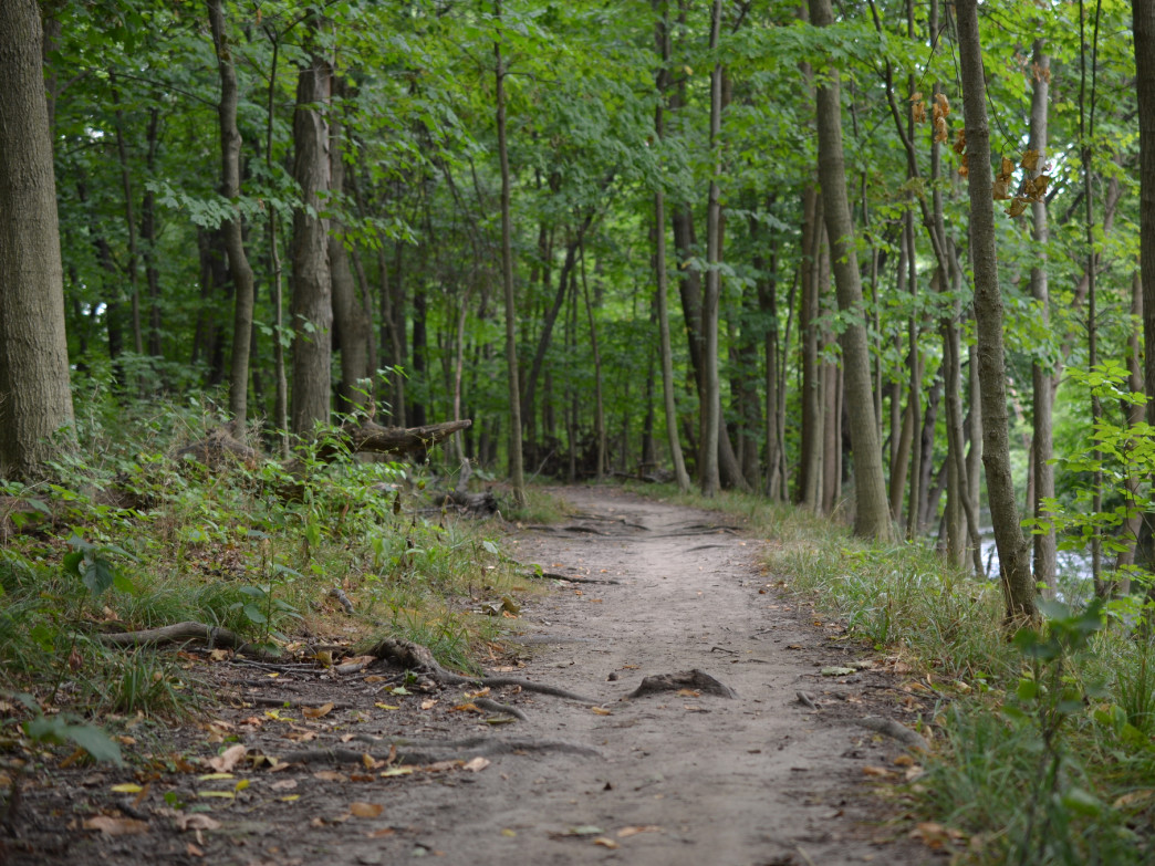 The trails are Knoch Knolls park are not well-marked, but they're worth the effort.