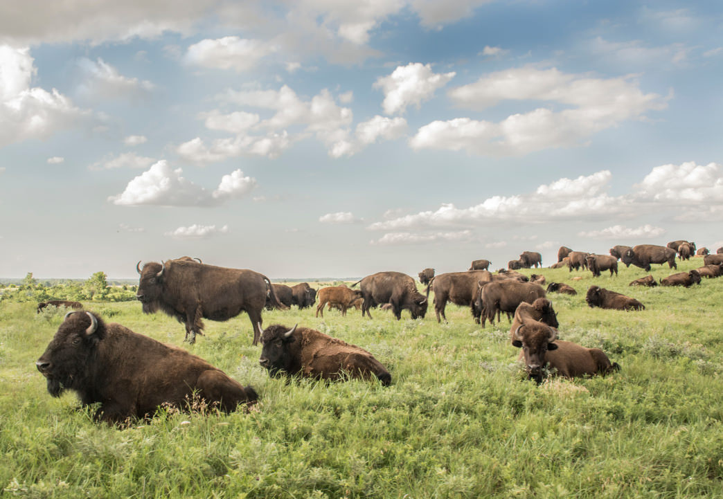Explore the backcountry and maybe even see the resident bison herd.