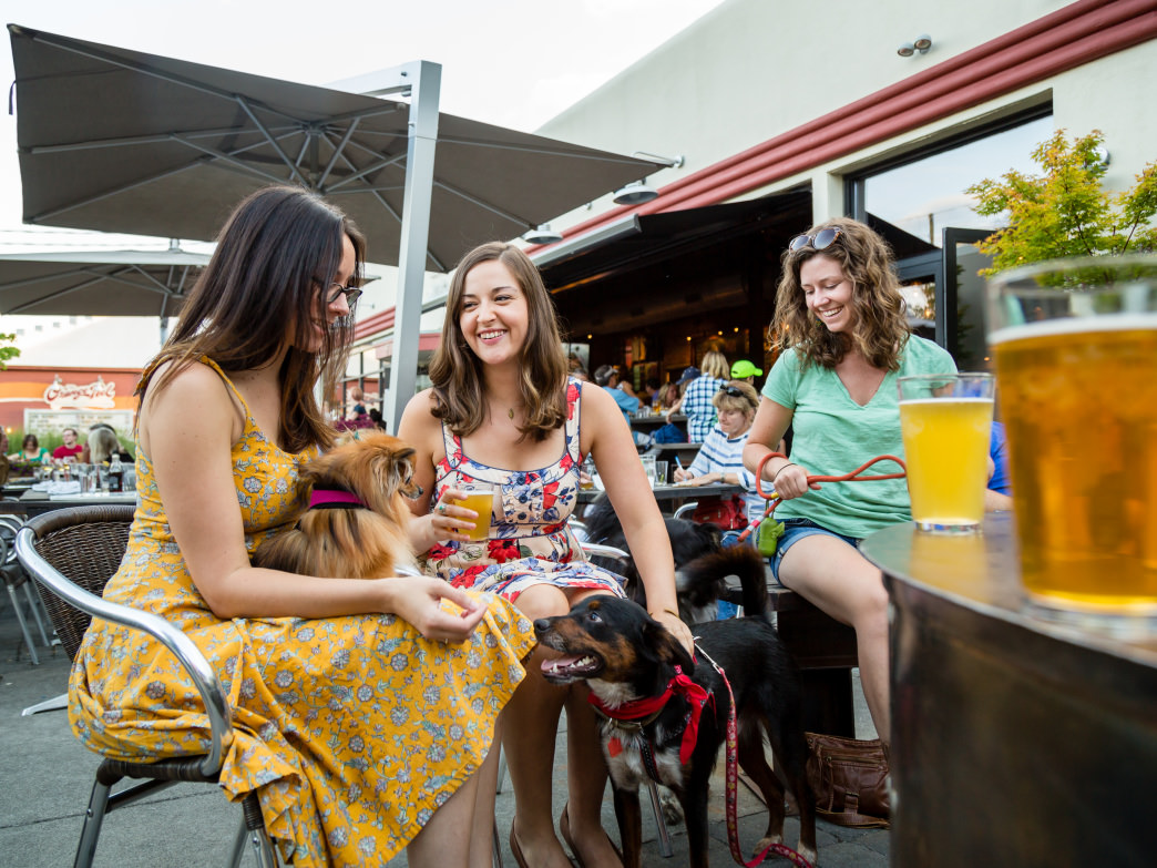 Wicked Weed is one of many Asheville breweries that welcome pups to their outdoor patios.