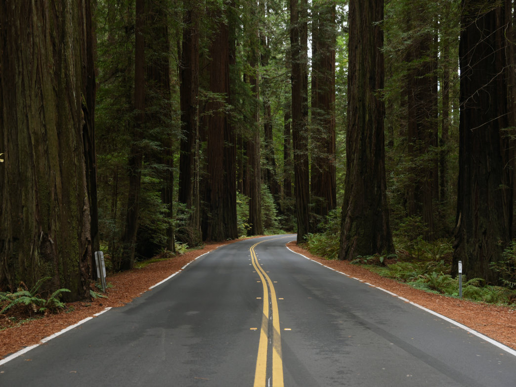 The Avenue of the Giants snaking through Humboldt County's Humboldt Redwoods State Park.