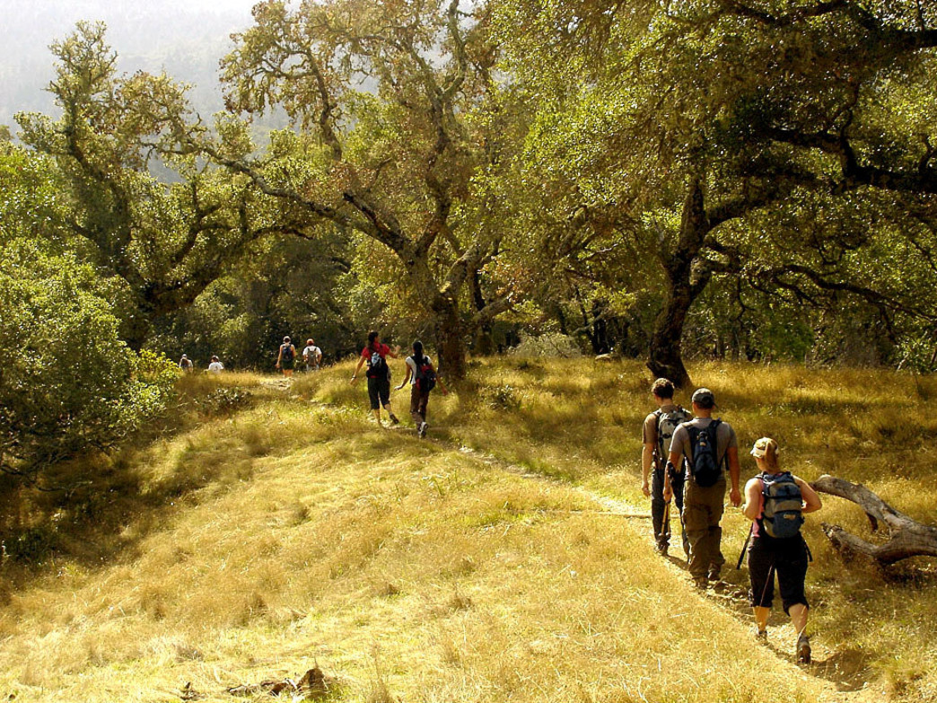 Mount Tam has dozens of trails ripe for exploration.