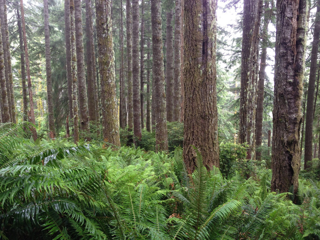 Douglas-fir forest on upper slopes of the Rock Creek Wilderness