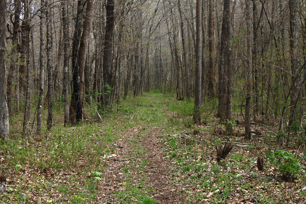 Buffalo Headwaters is a collection of trails that cruise through classic Ozark landscapes.