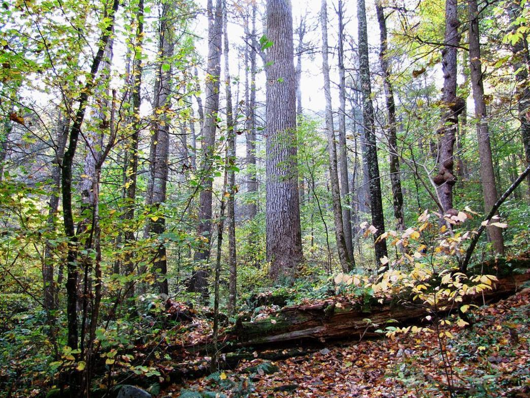 Hikers will find plenty of solitude in the Joyce Kilmer National Forest.