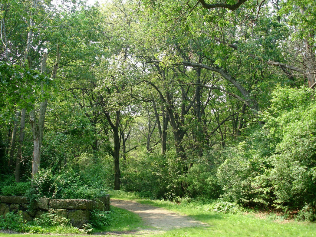 Inviting trail entrances surround the urban conservation land.