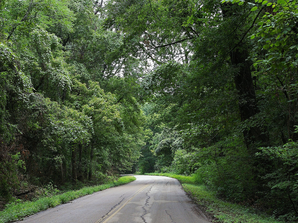 Trees canopy over the road at Meeman-Shelby Forest State Park.