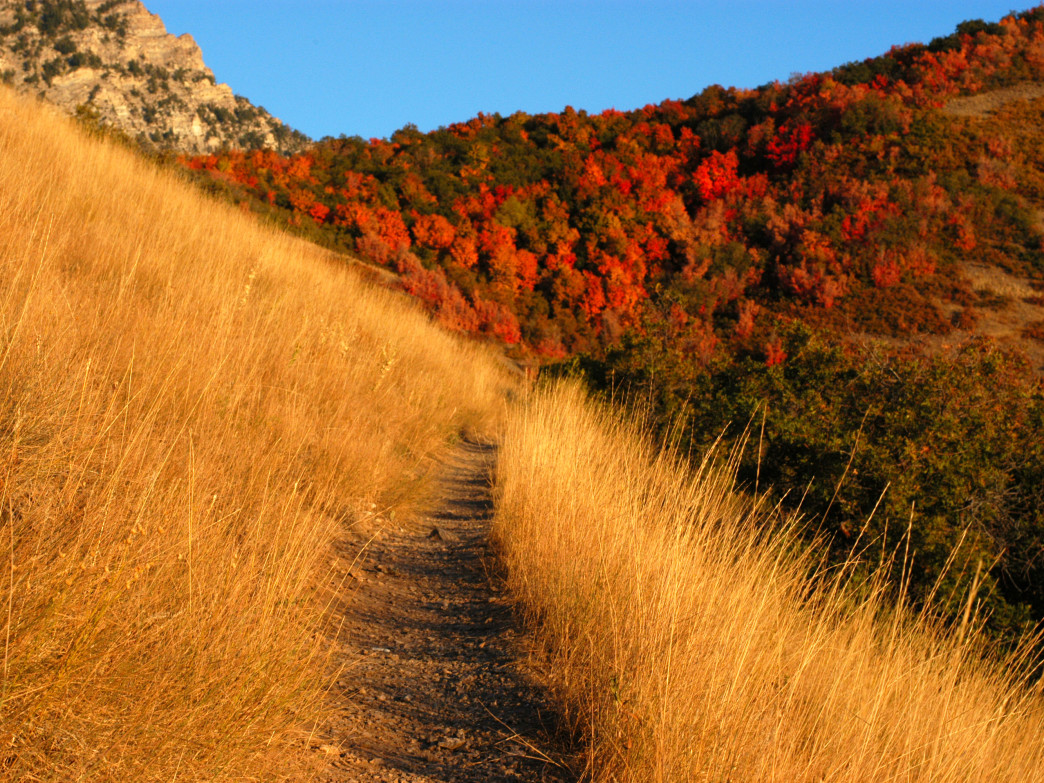 A new trail to explore can be thrilling for runners.