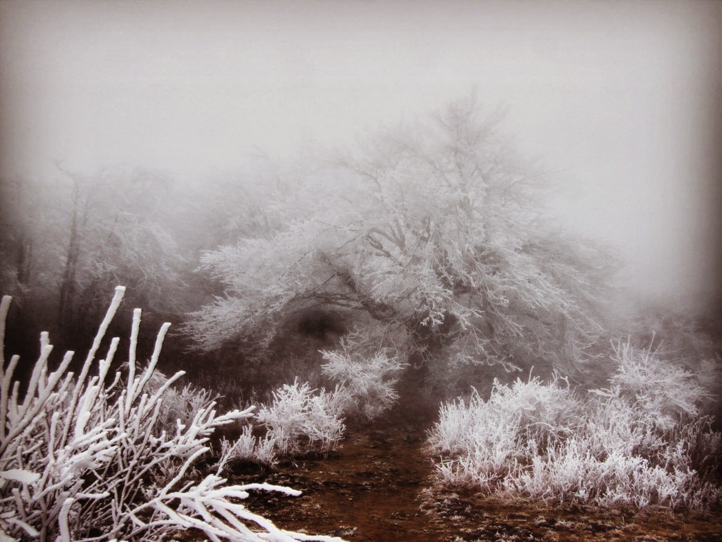 Hoarfrost on the Appalachian Trail.