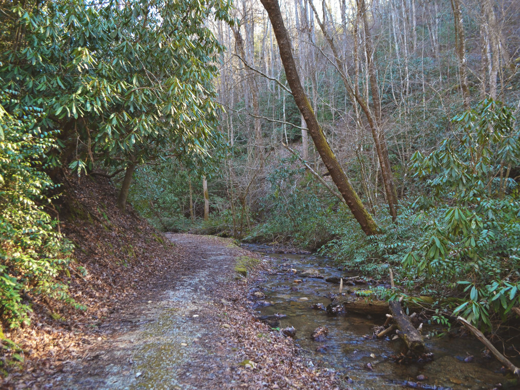 The Laurel Creek Loop combines several trails for a moderate trek through the forest and along the creek.]