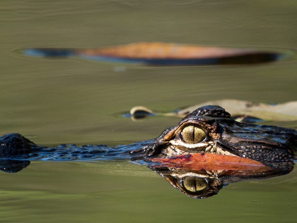 The Gators After Dark Tour is held weekly from June to August.