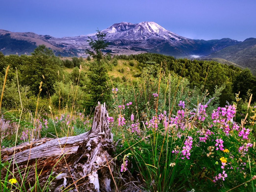 Nearly 35 years after Mount St. Helens erupted, the surrounding landscape is still recovering.
