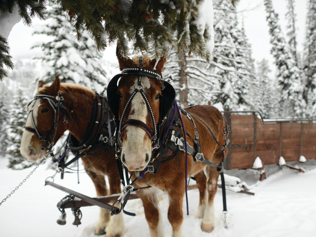 Get up close and personal with the horses that will bring you to dinner on a sleigh ride.