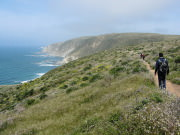 Image for Tomales Point Trail