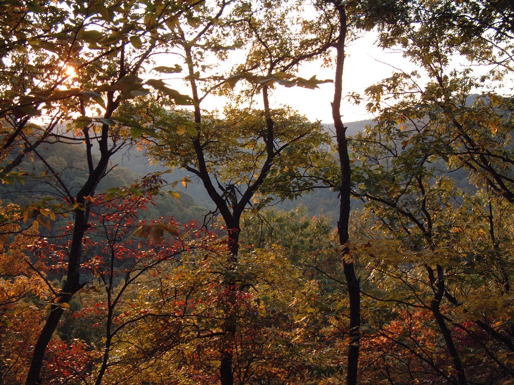 A fall day in Kanawha State Forest.