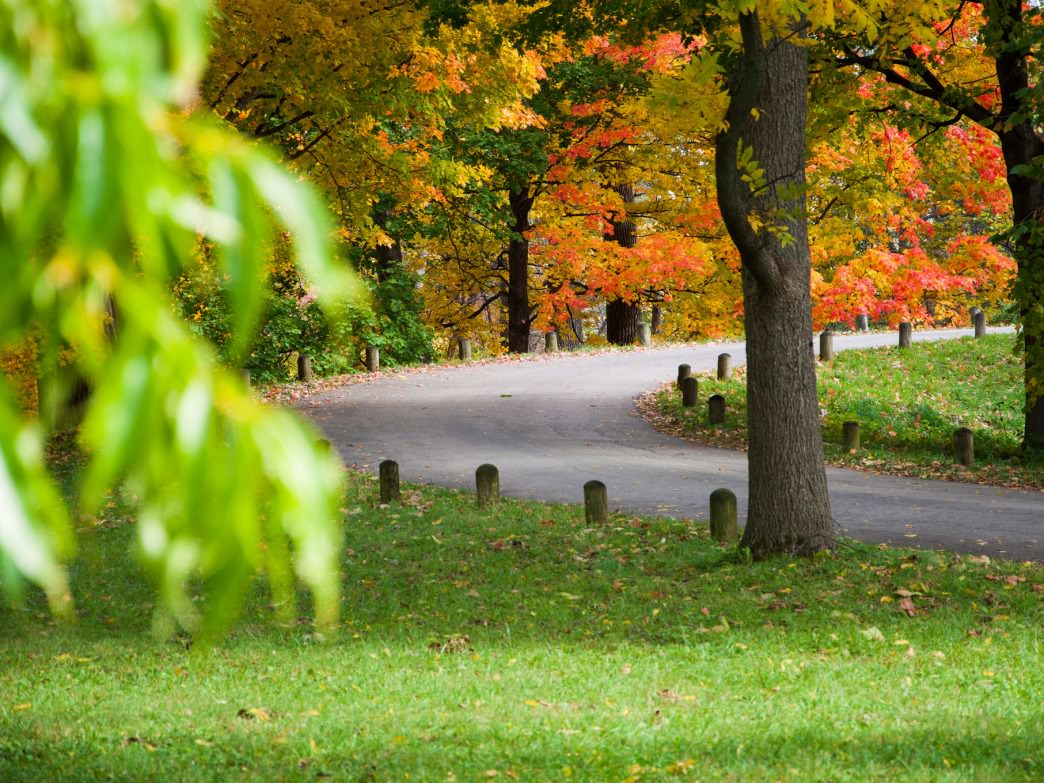 The nine miles of paved road through the Morton Arboretum offers runners and cyclists an excellent option in wet weather.