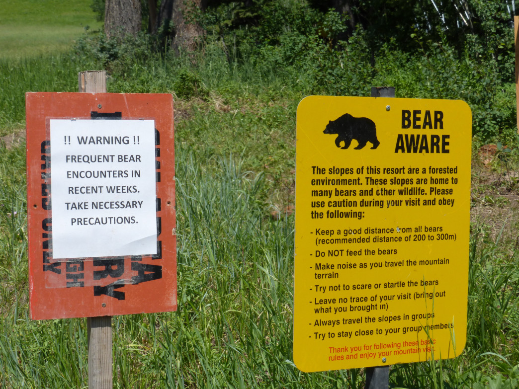 Bears frequent the slopes of Jackson Hole Mountain Resort so be sure to take precautions.