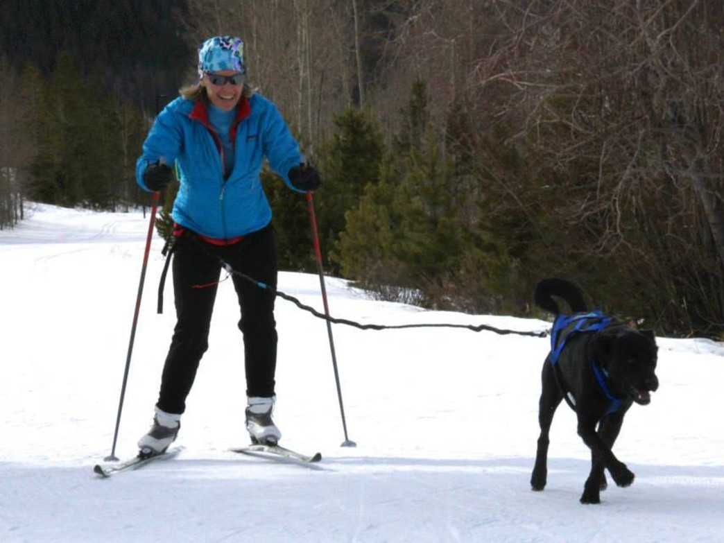 Skijoring typically includes one to three dogs and a cross-country skier. | Photo: High Country Dogs