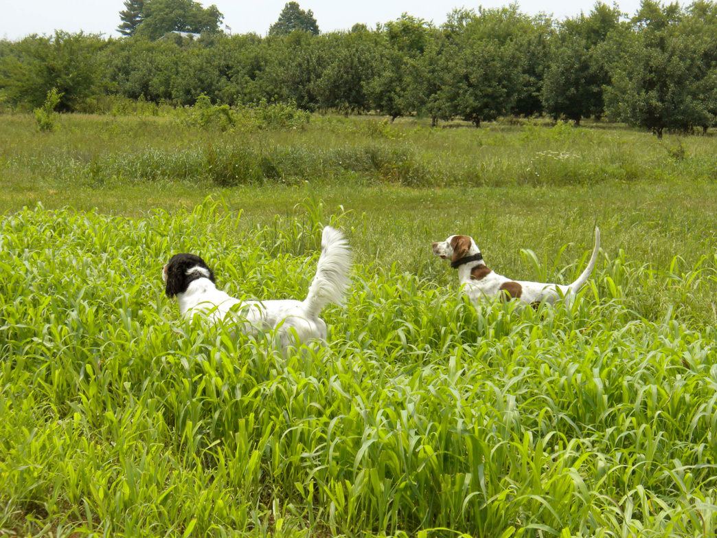 Bring your own dog or book a trained hunting dog to go out with you when you get there.