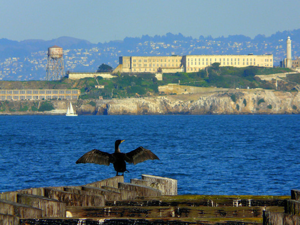 The swim from Alcatraz is 1.5 miles across the frigid San Francisco Bay.