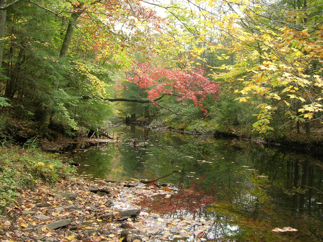 Beaver Creek in Daniel Boone National Forest is a great camping spot and is easily accessible.