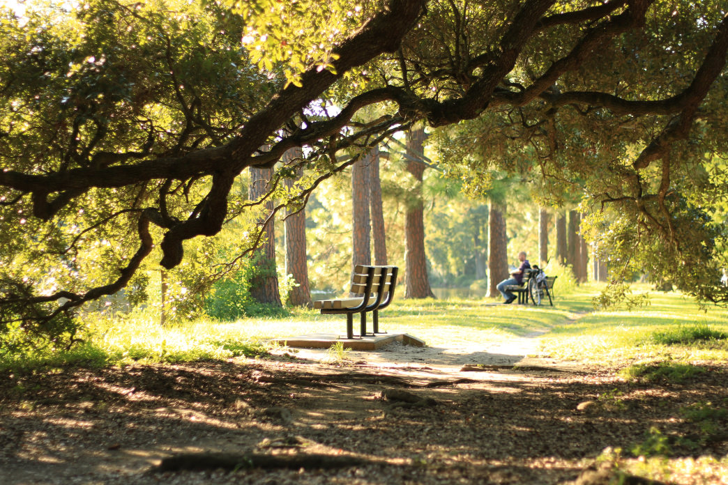 The historic Audubon Park is one of the best places for birdwatching in New Orleans.