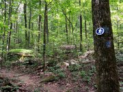 20170620_Tennessee_Chattanooga_Pot House Trail_Hiking2