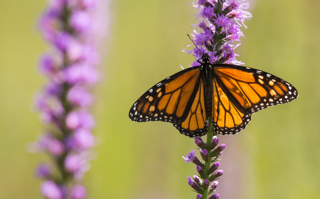 Be sure to take a break from biking to look at the wildlife, like butterflies at the Graham Creek Nature Preserve.