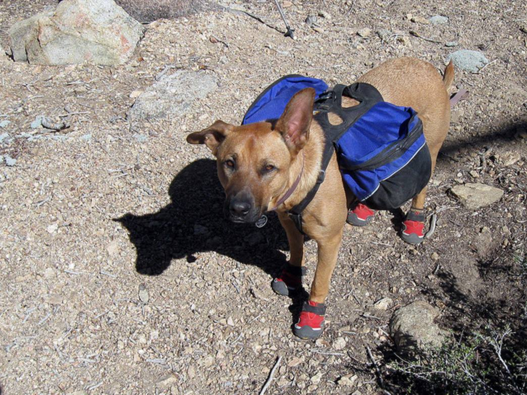Get your dog all geared up and ready for an adventure.