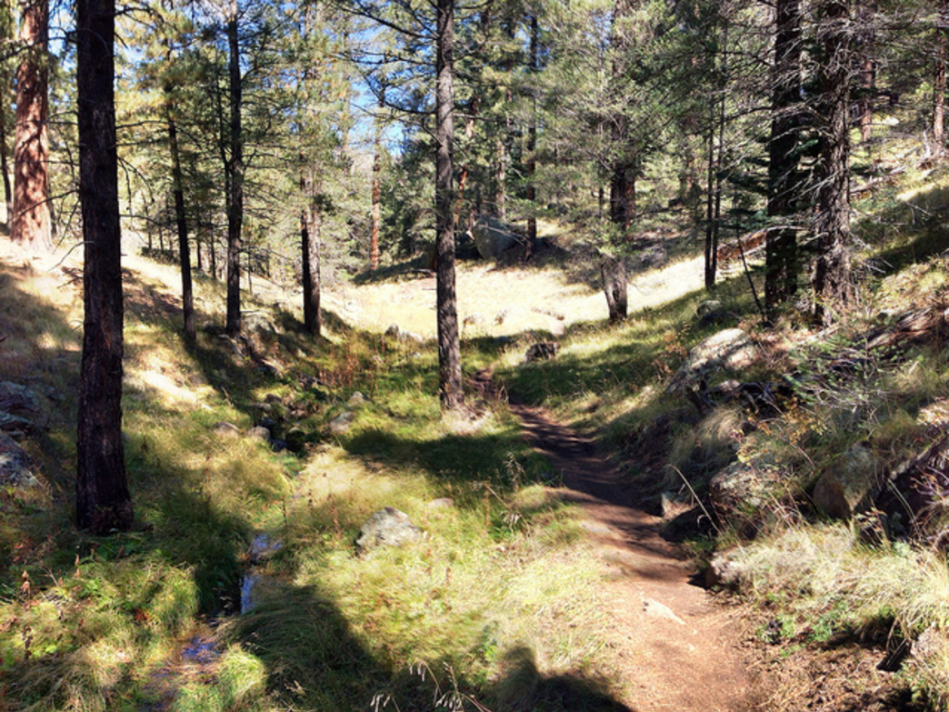 Schultz Creek and the mountain bike trail