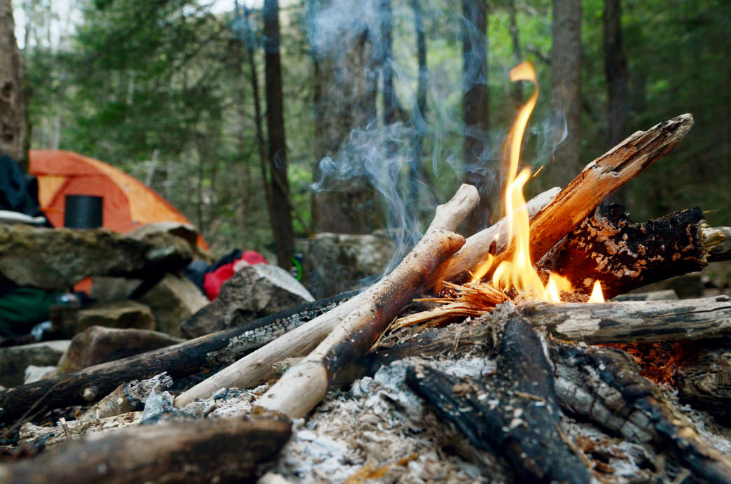 You'll want dry, dead wood to get your fire going.