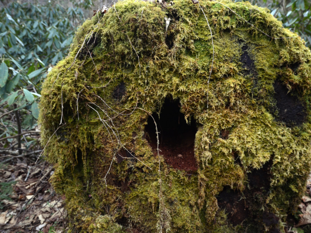 Moss that looks like it could be the beard of a wizard.