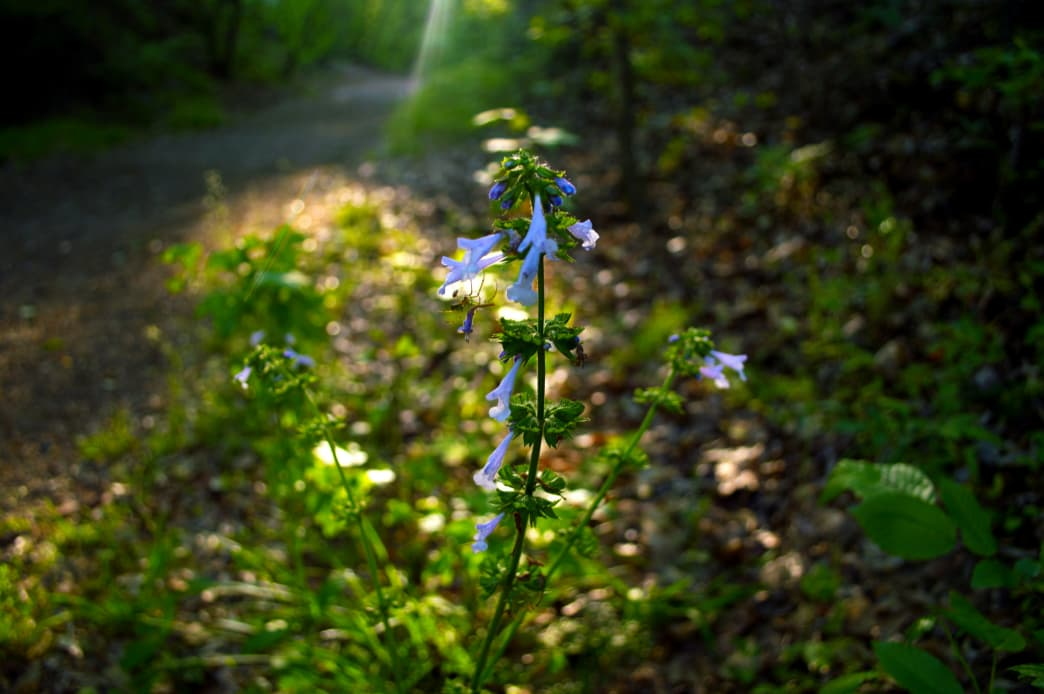 Look for different species of plants that live along the trail.