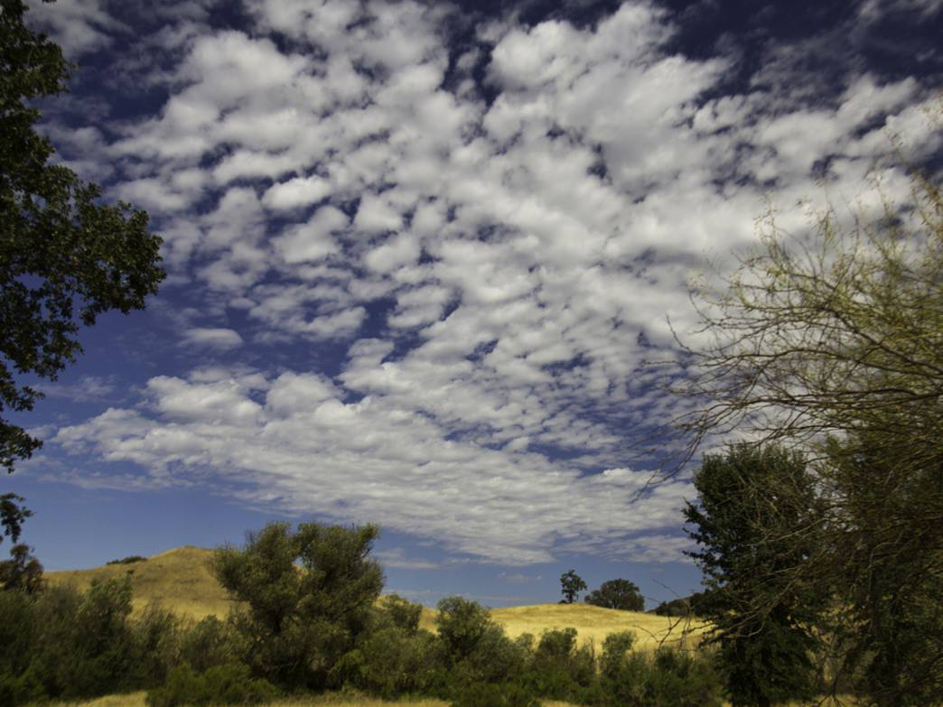 The golden grasses of Morrison Ranch in Cheeseboro Canyon