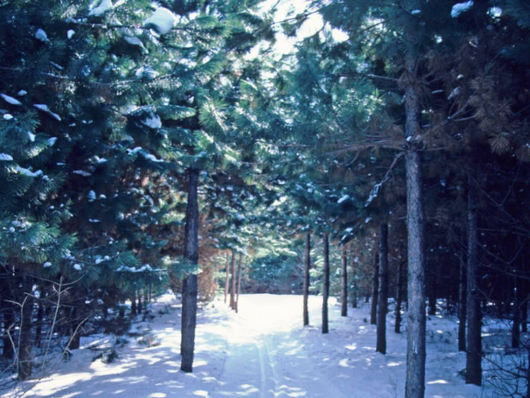 Pine-lined cross-country ski trails are one of the reasons the Kettle Moraine State Forest is one of the best destinations for Chicago cross-country skiers.