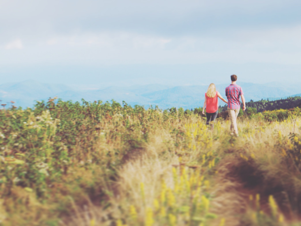 Take a stroll through the goldenrod on the summit of Black Balsam Knob.