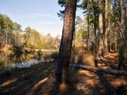 Image for Bartram Trail (South) - Backpacking