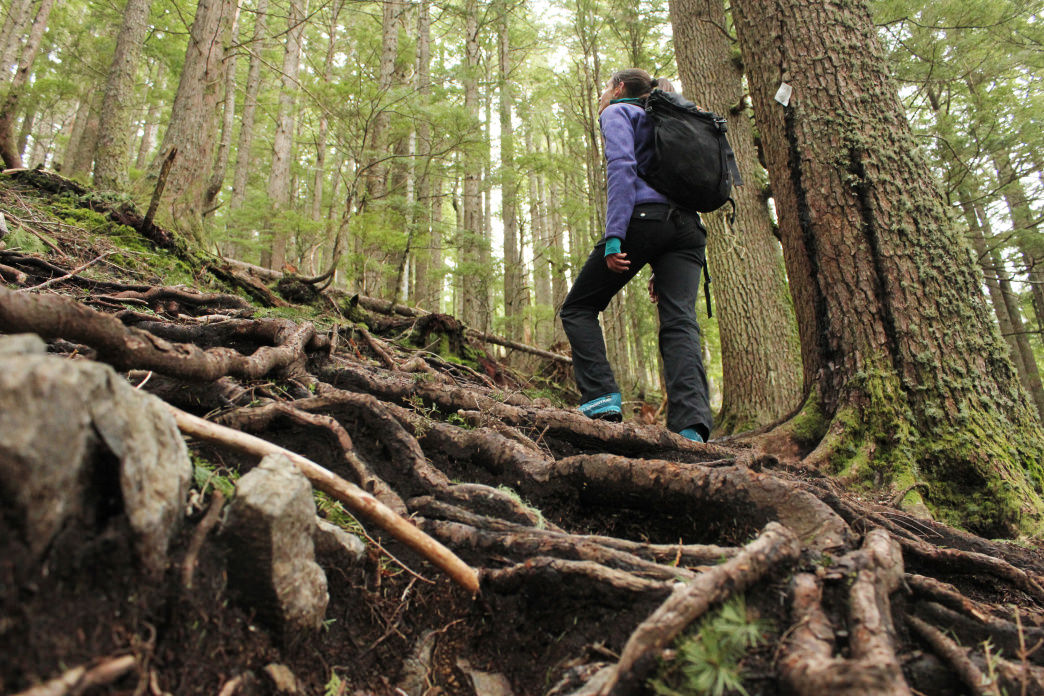 This hike can be rooty and technical on the way up.
