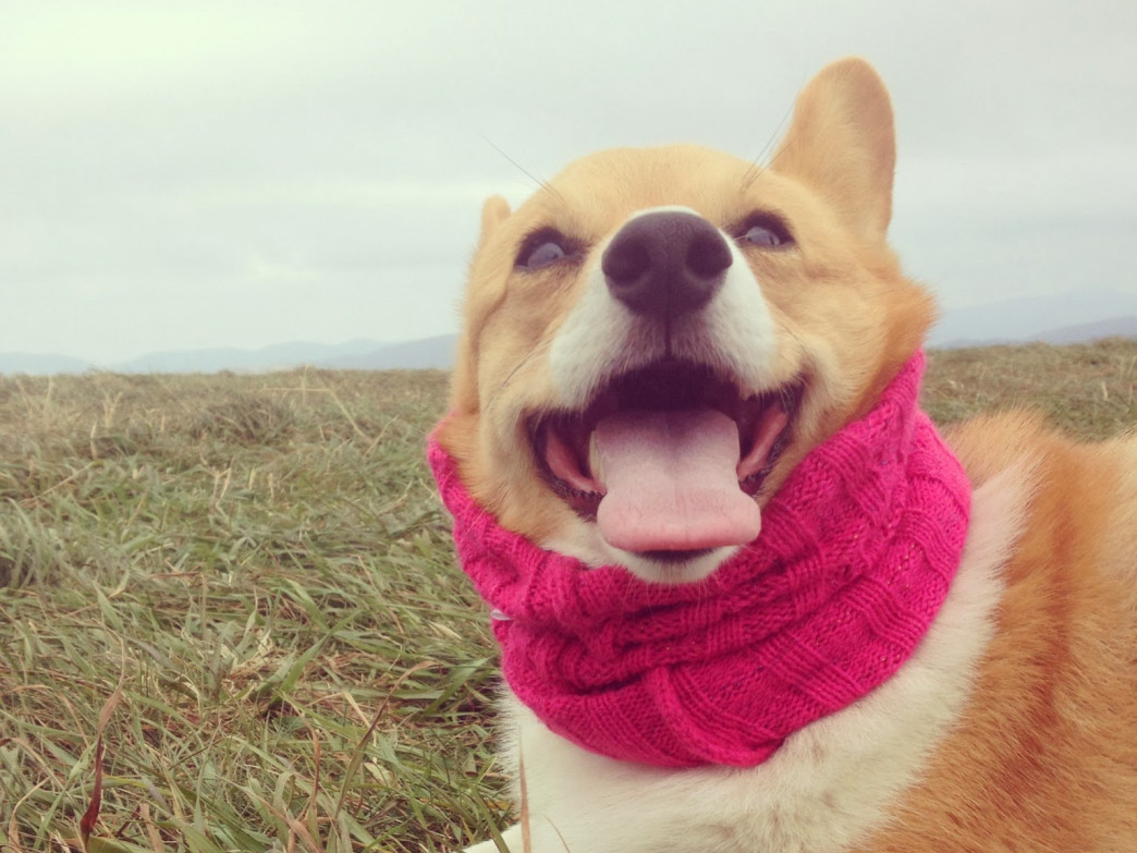 Apparently, scarf season isn't just for humans.