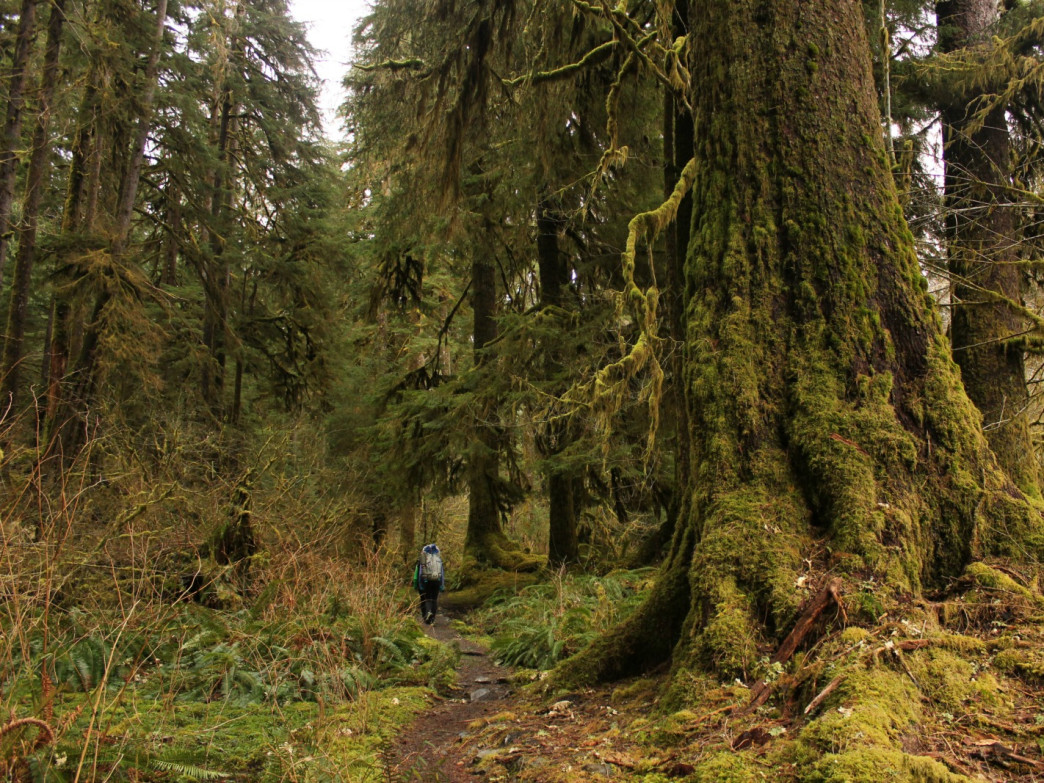The Hoh River Trail is one of Seattle's best backpacking trips.