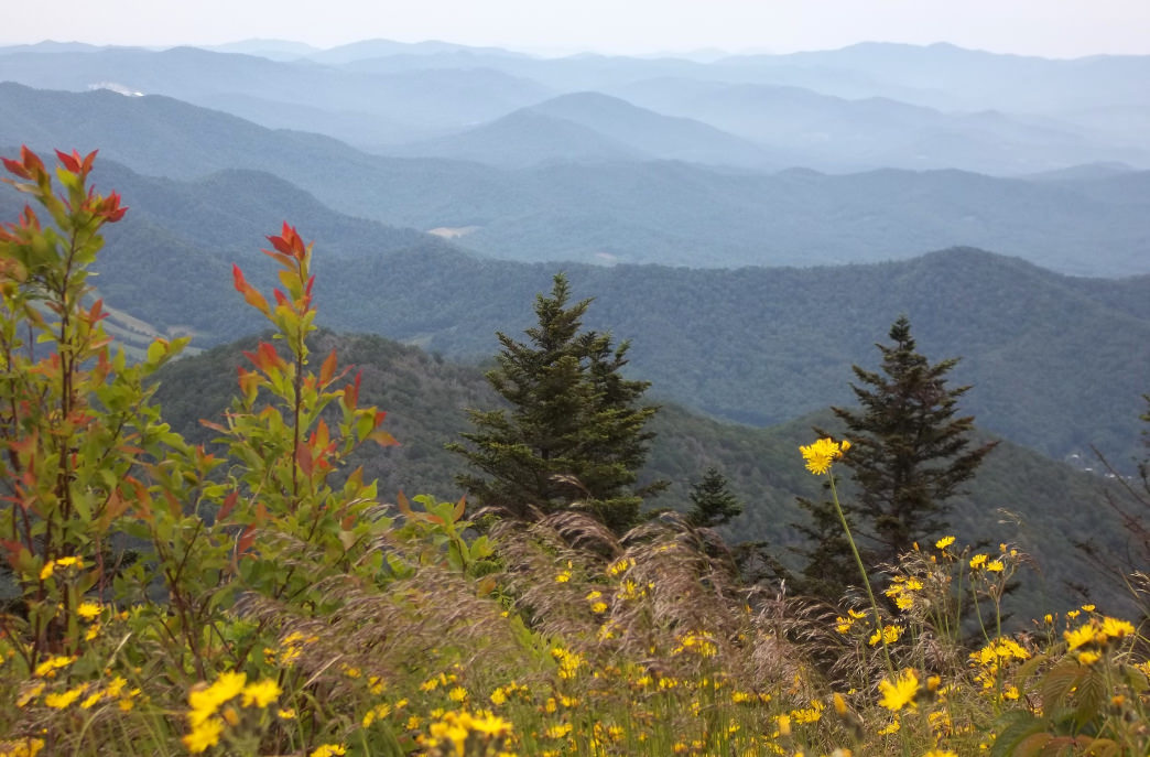 TENNESSEE: CARVERS GAP TO ROAN MOUNTAIN