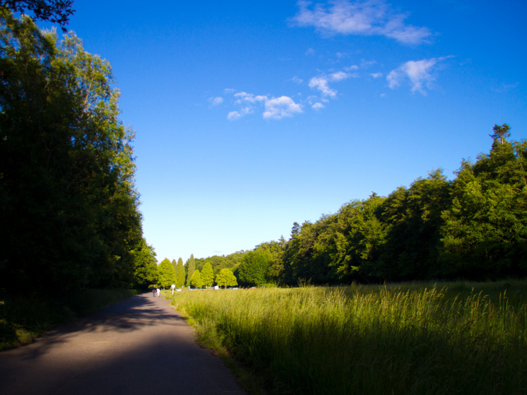 Discovery Park is a favorite among Seattle-area trail runners.