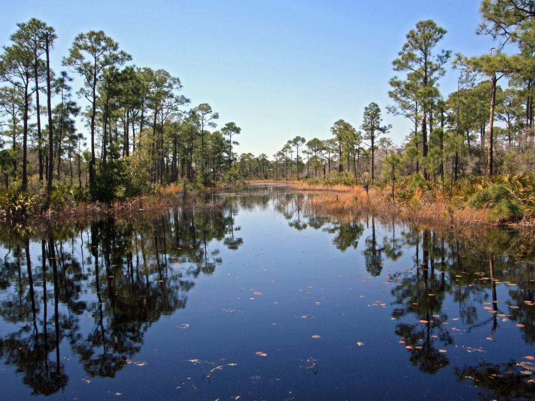 There is a wonderland of nature at the Bon Secour National Wildlife Refuge.